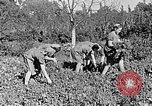 Image of Hitler Youth Poland, 1940, second 22 stock footage video 65675043395