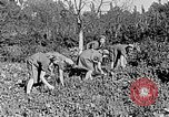 Image of Hitler Youth Poland, 1940, second 23 stock footage video 65675043395