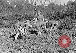 Image of Hitler Youth Poland, 1940, second 24 stock footage video 65675043395