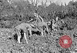 Image of Hitler Youth Poland, 1940, second 25 stock footage video 65675043395
