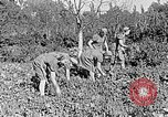 Image of Hitler Youth Poland, 1940, second 26 stock footage video 65675043395