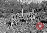 Image of Hitler Youth Poland, 1940, second 27 stock footage video 65675043395
