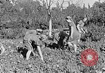 Image of Hitler Youth Poland, 1940, second 28 stock footage video 65675043395