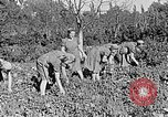 Image of Hitler Youth Poland, 1940, second 29 stock footage video 65675043395