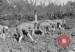 Image of Hitler Youth Poland, 1940, second 30 stock footage video 65675043395