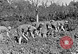 Image of Hitler Youth Poland, 1940, second 31 stock footage video 65675043395
