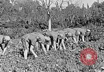 Image of Hitler Youth Poland, 1940, second 32 stock footage video 65675043395
