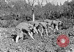 Image of Hitler Youth Poland, 1940, second 33 stock footage video 65675043395