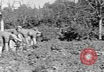 Image of Hitler Youth Poland, 1940, second 34 stock footage video 65675043395