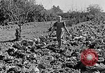 Image of Hitler Youth Poland, 1940, second 48 stock footage video 65675043395