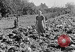 Image of Hitler Youth Poland, 1940, second 49 stock footage video 65675043395
