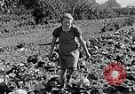 Image of Hitler Youth Poland, 1940, second 52 stock footage video 65675043395