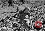 Image of Hitler Youth Poland, 1940, second 53 stock footage video 65675043395