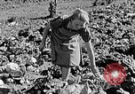 Image of Hitler Youth Poland, 1940, second 54 stock footage video 65675043395