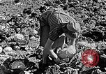 Image of Hitler Youth Poland, 1940, second 59 stock footage video 65675043395