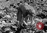Image of Hitler Youth Poland, 1940, second 60 stock footage video 65675043395
