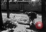 Image of Hitler Youth Poland, 1940, second 17 stock footage video 65675043400