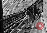 Image of Hitler Youth Poland, 1940, second 25 stock footage video 65675043400