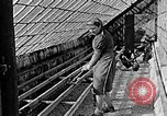 Image of Hitler Youth Poland, 1940, second 31 stock footage video 65675043400
