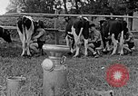 Image of Hitler Youth Poland, 1940, second 52 stock footage video 65675043400