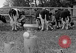 Image of Hitler Youth Poland, 1940, second 54 stock footage video 65675043400