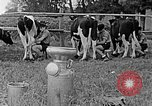 Image of Hitler Youth Poland, 1940, second 55 stock footage video 65675043400