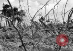Image of Aggressors troops Vieques Island Puerto Rico, 1950, second 21 stock footage video 65675043405
