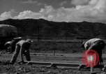 Image of Houses under construction San Juan Puerto Rico, 1950, second 34 stock footage video 65675043419