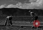 Image of Houses under construction San Juan Puerto Rico, 1950, second 37 stock footage video 65675043419