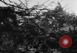 Image of German troops Warsaw Poland, 1943, second 27 stock footage video 65675043477