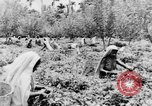 Image of natives in town Ceylon, 1937, second 57 stock footage video 65675043493