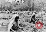 Image of natives in town Ceylon, 1937, second 59 stock footage video 65675043493