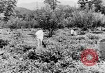 Image of natives in town Ceylon, 1937, second 61 stock footage video 65675043493