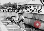 Image of Everyday life in Asian city Bangkok Thailand, 1937, second 44 stock footage video 65675043496
