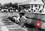 Image of Everyday life in Asian city Bangkok Thailand, 1937, second 45 stock footage video 65675043496