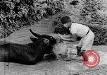 Image of Wonders of the World Java Indonesia, 1937, second 54 stock footage video 65675043499