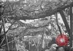 Image of trench camouflage World War 1 France, 1918, second 17 stock footage video 65675043548
