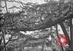 Image of trench camouflage World War 1 France, 1918, second 19 stock footage video 65675043548