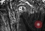 Image of trench camouflage World War 1 France, 1918, second 27 stock footage video 65675043548