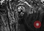 Image of trench camouflage World War 1 France, 1918, second 34 stock footage video 65675043548