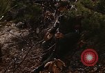 Image of 7th Infantry Division soldiers Korea, 1968, second 15 stock footage video 65675043558