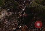 Image of 7th Infantry Division soldiers Korea, 1968, second 18 stock footage video 65675043558