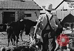Image of Life in Zionist moshav and Kibbutz colonies Palestine, 1941, second 37 stock footage video 65675047424