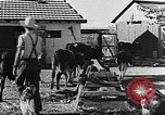 Image of Life in Zionist moshav and Kibbutz colonies Palestine, 1941, second 39 stock footage video 65675047424