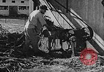 Image of Life in Zionist moshav and Kibbutz colonies Palestine, 1941, second 41 stock footage video 65675047424