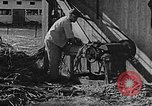 Image of Life in Zionist moshav and Kibbutz colonies Palestine, 1941, second 45 stock footage video 65675047424