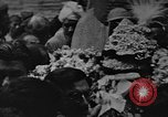 Image of Shia Muslims commemorate death of Ali, Mohammed's son-in-law India, 1936, second 42 stock footage video 65675050629