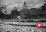 Image of shelling and drying of coconut Caracas Venezuela, 1940, second 11 stock footage video 65675050637