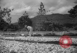 Image of shelling and drying of coconut Caracas Venezuela, 1940, second 13 stock footage video 65675050637