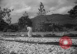 Image of shelling and drying of coconut Caracas Venezuela, 1940, second 15 stock footage video 65675050637